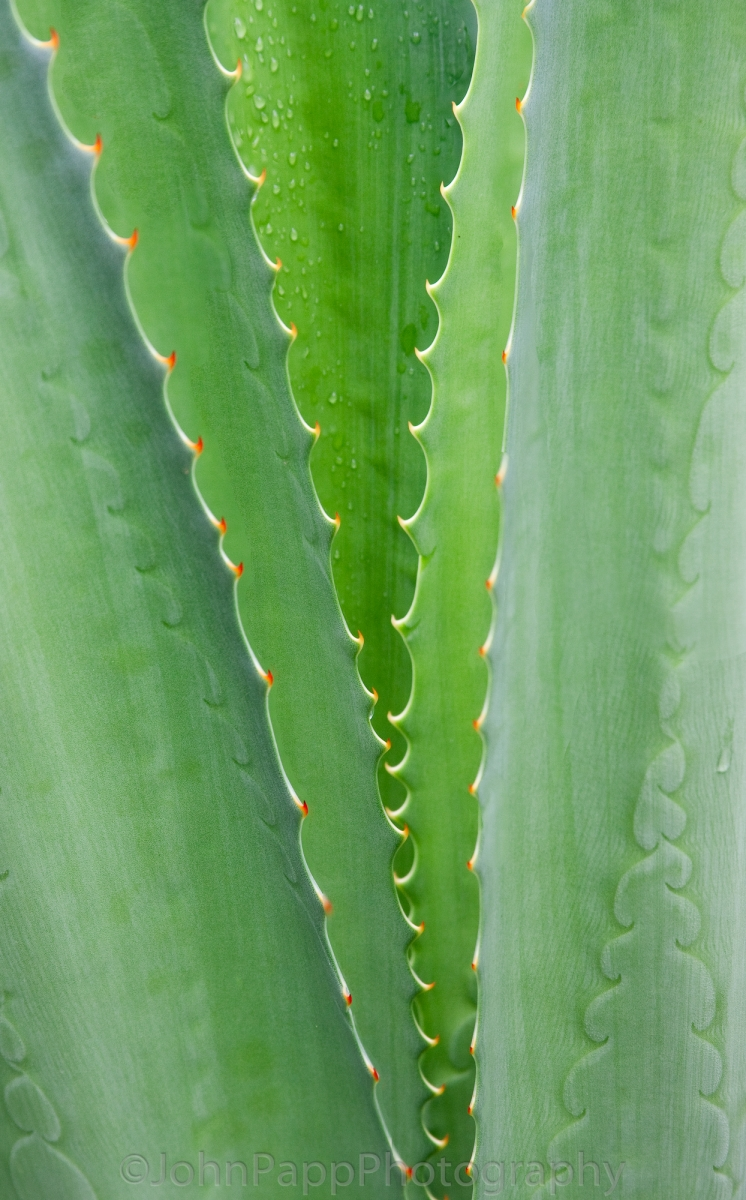 Aloe Succulent (1 of 1)